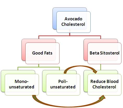 avocado cholesterol foods