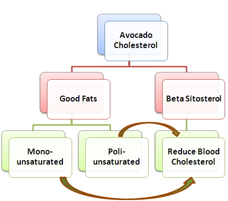avocado cholesterol foods