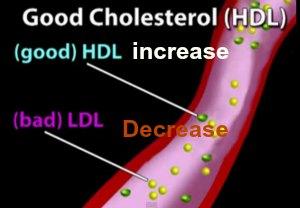 increase hdl cholesterol level naturally