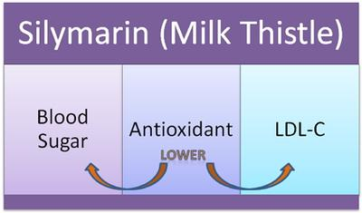 Milk Thistle Cholesterol Lowering