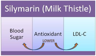 Milk Thistle Cholesterol Lowering